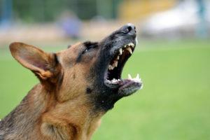 Eine Mietminderung wegen Lärm durch ein Tier ist auf jeden Fall individuell zu bewerten.