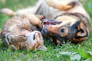 """Das Mietrecht zum Thema """"Haustiere"""" ist nicht aussagekräftig. Mieter müssen sich auf Urteile verlassen."""
